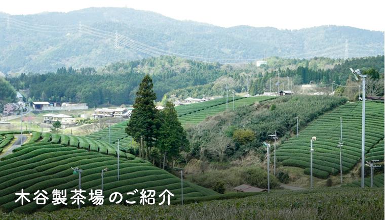 木谷製茶場のご紹介
